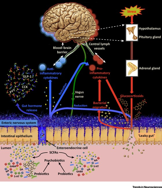 Psychobiotics and the Manipulation of Bacteria–Gut–Brain Signals
