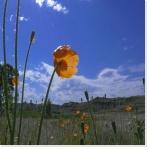 Photo : Photolibre.fr